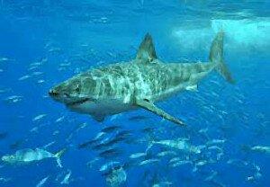нападение акул в море